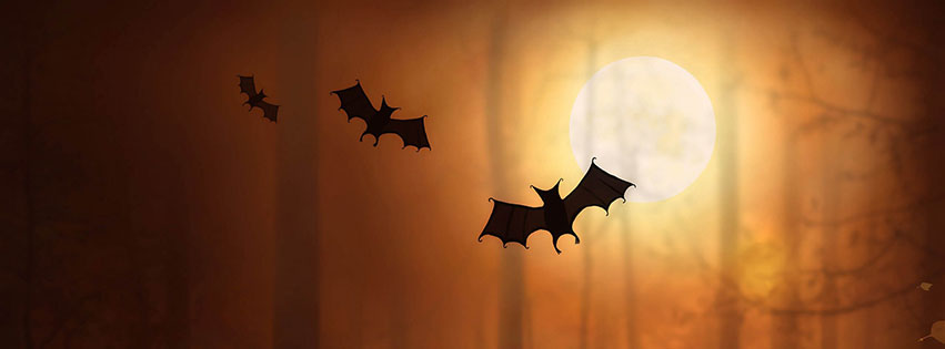 con roi trong halloween voi facebook